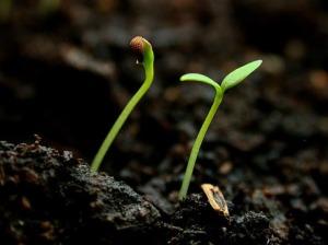 SeedGrow